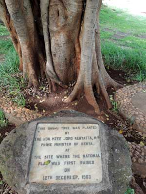 a root of Ficus thonningii has reached the soil and might eventually overtake the host, Kenya, photo © by Michael Plagens
