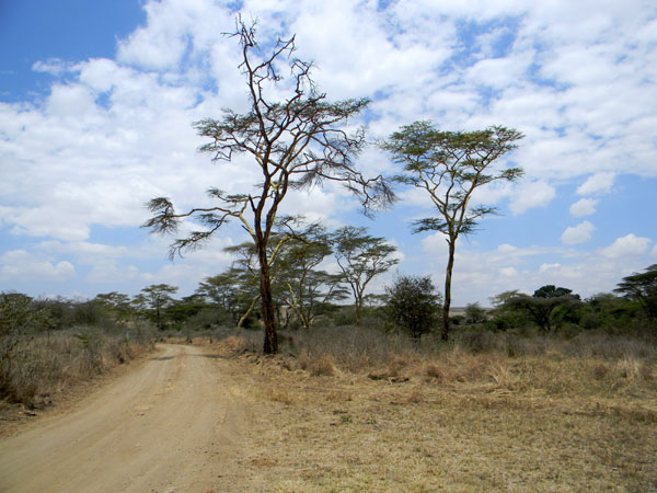 Nairobi National Park photo © by Michael Plagens