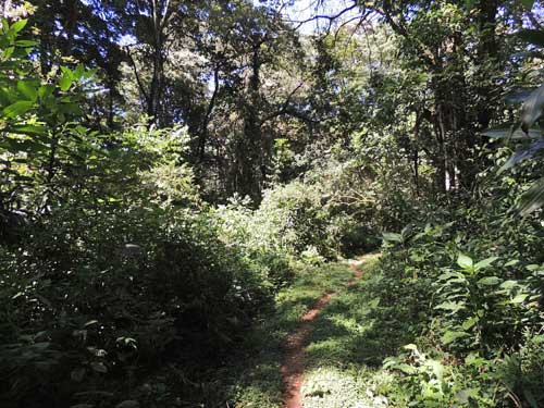 Trail through Kakamega Forest National Preserve, photo © by Michael Plagens