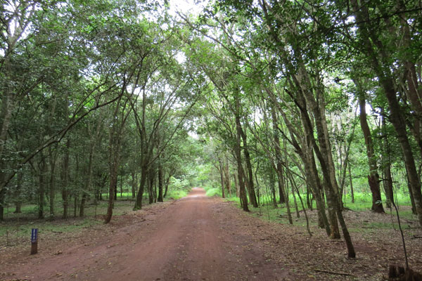 Karura Forest, Nairobi, Kenya, photo © by Mwangi Gitau