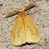 possibly Geometridae moth © Michael Plagens