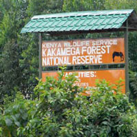 Kakamega Forest is the easternmost segment of the Africas equatorial rainforest. Photo © Michael Plagens