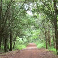 Forest Trail at Karura. Photo © Mwangi Gitau